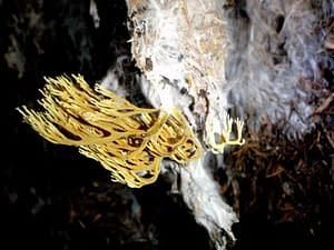 O hubách z jaskyne Sokolová v Jánskej doline