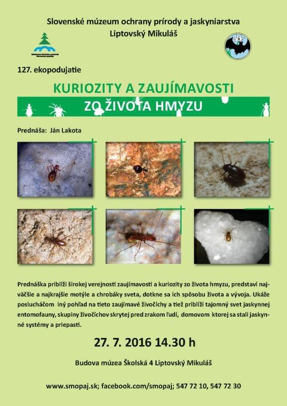 Kuriozity a zaujímavosti zo sveta hmyzu
